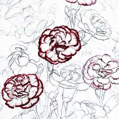 Naturstudium Nelke Blütenkopf